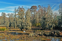 SWAMP 7 (KayLov) Tags: nature environment ecology swamp phinizy augusta ga georgia creek water pond lake wildlife