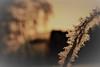 warm and cold [explore 22.02.2017] (camerito) Tags: ice crystals eiskristalle stars sterne warm light warmes licht kalte temperatur morning sun morgensonne winter camerito nikon1 j4 austria österreich kärnten carinthia unlimitedphoto flickr