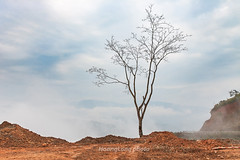 _J5K8507+11.0217.Tà Tổng.Mường Tè.Lai Châu (hoanglongphoto) Tags: asia asian vietnam northvietnam northwestvietnam nature tree sky cloud clouds hdr outdoor landscape scenery vietnamlandscape vietnamscenery vietnamscene canon canoneos1dsmarkiii canonef2470mmf28liiusmlens tâybắc laichâu mườngtè tàtổng phongcảnh phongcảnhtâybắc thiênnhiên cây bầutrời mây