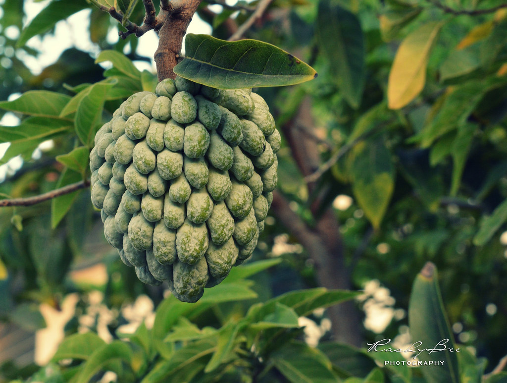 The World's Best Photos of fruit and sweetsop - Flickr ...