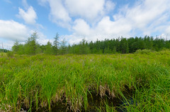 Meadow (wackybadger) Tags: county blue sky tree ex wisconsin tom clouds dc nikon wildlife meadow sigma f4 sna sedge chippewa hsm lawin d7000