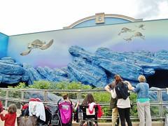 Crush's Coaster (Elysia in Wonderland) Tags: birthday park vacation holiday paris france june finding nemo disneyland disney turtles rollercoaster studios walt crush coaster parc elysia 2015 crushs