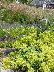 Flowerbed (Alta alatis patent) Tags: flowers garden flowerbed borders alchemillamollis ladysmantle switchgrass