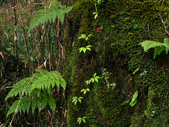 IMGP5439 (SY Huang) Tags: landscape taiwan  chiayi  alishan  sacredtree    alishannationalscenicarea alishanforestrailway