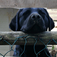 holiday in Italy (MiChaH) Tags: italy dog holiday black spring labrador hond lente zwart italie 2015 istrie