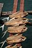 Auswahl-6034 (wolfgangp_vienna) Tags: thailand island asia asien harbour insel ko seafood hafen trat kut kood kokood kokut kohkut aoyai
