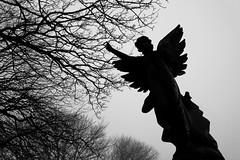 IMG_1223A (smiscandlon) Tags: mere knolls cemetery graveyard angel statue grave stone fog trees mist gothic atmosphere sunderland silhouette bw