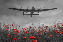 POP0007 (Smart Aviation Art) Tags: poppy poppies poppyfield poppyfields lancaster vulcan avro spitfire hurricane aircraft military bbmf