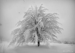 Palmera de invierno.- Winter palm tree. Nº186