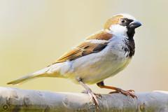 Sparrow Photography