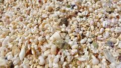 🌊 Sable en coquillage sur une île de crête 🇬🇷 (Boutillier Geoffrey) Tags: mer summer coquillage sable été crustacé sea beach crète grêce europe plage couleur naturel natural nature eau océan water vie