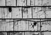 Tattered and Worn (Katrina Wright) Tags: dsc0040 wall cladding wood paint peelingpaint decay damage weathered worn siding panels flakes