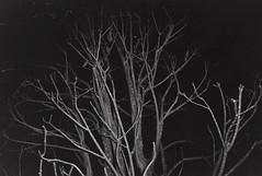 Halloween (diehesh) Tags: analog bw black white 400 iso 400iso