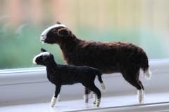 balmore sheep and lamb (adore62) Tags: balmore sheep herdwicksheep swaledale lamb herd flock