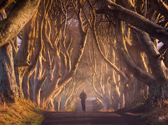 king's road (kaihornung-photography) Tags: northernireland ireland dark hedges got road trees street light mood moody mystique human man walk lonely irland allee bäume licht abend golden color nature iconic