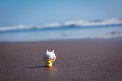 Shirahama / Canon EOS60D:Canon EF-S60mm F2.8 Macro USM (telenity) Tags: japan tateyama shirahama coast ocean usamaru canon cute eos60d macro 日本 館山 うさまる 可愛い シュール 海 海岸 白浜
