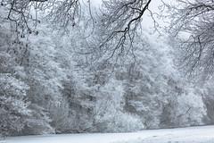 Winter / Hiver (tribsa2) Tags: nederlandvandaag marculescueugendreamsoflightportal winter hiver forest foret bos