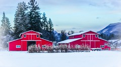 White out (Images by Christie ♪♫ Happy Clicks for 2017 !) Tags: barn country snow winter red white bc canada maple ridge