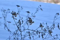 PHO_0173 (Dimi_M) Tags: neige soleil nature foret