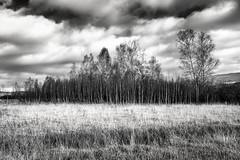 L'armée de peupliers II (electron2009) Tags: peuplier arbre foret hiver nuage nuageux canon 5diii 1635l f4
