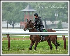 Mott Trainee on the Oklahoma (EASY GOER) Tags: horses horse ny newyork sports rain race canon track saratoga upstate running racing 5d athletes races spa thoroughbred equine thoroughbreds 2015 markiii