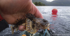 Sea Scorpion (Nicolas Valentin) Tags: light sea sky fish landscape freedom scotland fishing scenery aqua kayak alba scenic adventure scorpion kayaking loch lochetive kayakfishing seascorpion aplusphoto kayakscotland kayakfishingscotland
