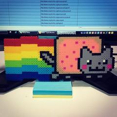 (layla blackshear) Tags: cat work rainbow poptart