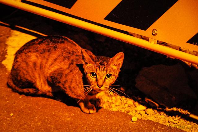 Today's Cat@2015-07-24