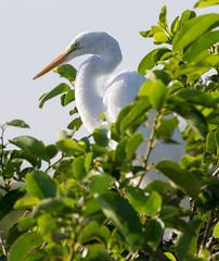 20150722-_74P8512.jpg (Lake Worth) Tags: bird nature birds animal animals canon wings florida wildlife feathers wetlands everglades waterbirds southflorida 2xextender sigma120300f28dgoshsmsports