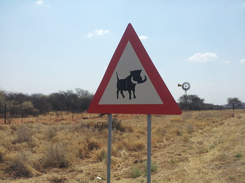 Attention aux phacochères, Namibie