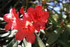 IMG_4557 (cheryl's pix) Tags: california flowers flower berkeley botanicgarden botanicalgardens botanicalgarden botanicgardens berkeleyca berkeleybotanicalgarden ucbotanicalgarden universityofcaliforniabotanicalgarden universityofcaliforniabotanicalgardenatberkeley