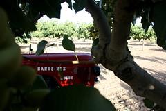 IMG_0382 (ACATCT) Tags: old españa tractor spain traktor agosto toledo antiguo massey pistacho tembleque barreiros 2015 bustards perdices liebres avutardas ff30ds r350s