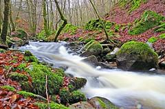 The Inchewan Falls (landscape) (eric robb niven) Tags: ericrobbniven scotland birnam perthshire walking landscape dunkeld