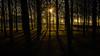 Wintersonne (macrobernd) Tags: wald wood forrest sun set sunset sonnenuntergang winter wintersonne bäume buga park münchen riem gold golden leicam9 summilux50mmf14 munich licht light sundown