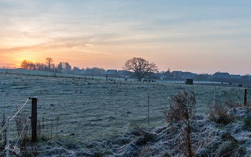 Frostige Weide