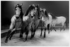 gallop into the light (i.v.a.n.k.a) Tags: circus horses motion gallop stuttgart germany ivanahesova ivanadorn sonyalpha weltweihnachtscircus