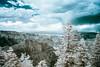 Grand Canyon, North Rim (jev) Tags: grandcanyonnationalpark grandcanyon hualapaitribalnation trielmar161821mm unescoworldheritagesite coloradoriver leicam8 northrim 06000000 06002000 06002002 06007000 avenon az hdr ir720 super wate arizona blue digitalinfrared ecology environmentalism geological geology infra infrared landscape nationalpark spectrum surreal white wide wwwartqcom