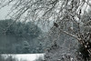December, 2016 (koperajoe) Tags: perspective snowytrees snowybranches depthoffield forest westernmassachusetts newengland woods