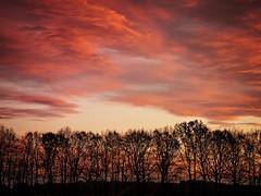 2016-11-20_17-16-59 (torstenbehrens) Tags: nature tree sky cloud tarbek schleswigholstein deutschland olympus ep1 digital camera on1 on1pic