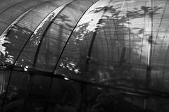 _R016045 (yukiosakaue) Tags: ricohgr gr reflection bw blackandwhite bridge plant shadow silhouette horizon