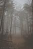 Winter (Trevor McGoldrick) Tags: fog foggy haze hazy winter afternoon woods forest walkway gloomy canon