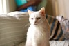 my beautiful boy Charlie (rootcrop54) Tags: charlie white allwhite male cat oddeyes oddeyed window naturallight beautiful macska kedi 猫 kočka kissa γάτα köttur kucing gatto 고양이 kaķis katė katt katzen kot кошка mačka maček kitteh chat ネコ