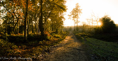 Winter Light-8 (broadswordcallingdannyboy) Tags: light twilight dusk mood sun magichour longlight sunset winterlight sparkle countryside winter frost eos7d 1740mm wideangle lightfantastic shadows lightandshadows surrey nationaltrust devilspunchbowl surreylandscape