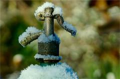 the bottle........ (atsjebosma) Tags: bottle fles garden tuin snow winter sneeuw macro bokeh atsjebosma january 2017 light colours licht kleuren