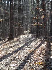 trail (mike greenwood 13) Tags: vermont vt snakemountain hiking addisoncounty