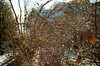 Sparkle (Georgie_grrl) Tags: christmascottagechoir choir friends friendship social music princeedwardcounty lakeontario winter pentaxk1000 rikenon12828mm droplets beads icy ice patterns branches sparkly pretty beautiful