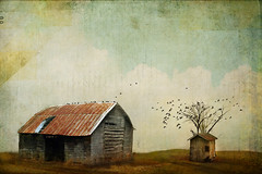 In Times of Sorrow, You Were There (Distressed Textures) Tags: distressedtextures newtextures old barn shed friends landscape textured birds sky storybook storytelling through images