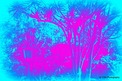 In the garden (Rollingstone1) Tags: puertodelacruz garden jardin agathachristie tenerife spain colour colourful themysteryoftheblurtrain modernart artistic art impressionist light tree flowers lamp pink blue texture