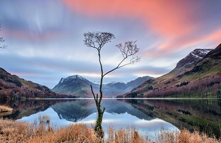 A Long look at the Buttermere Tree.