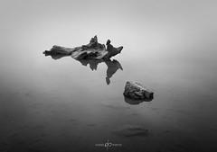 Beneath the Reflections (Dan Portch) Tags: minimal fine art black white bw long exposure le stoke gabriel devon southdevon englishriviera pond rocks water shoreline